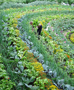 Companion Planting and Terracing